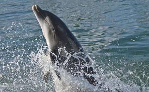1001 thắc mắc: Cá heo có phải là loài thông minh nhất thế giới?