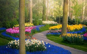 Vườn hoa đẹp nhất thế giới đóng cửa sau 71 năm, nhiếp ảnh gia tò mò muốn vào bên trong thì choáng ngợp với cảnh tượng trước mắt
