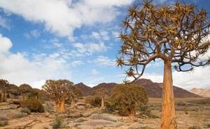 Kham phá Succulent Karoo, sa mạc đẹp nhất thế giới