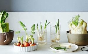 Sở hữu vườn rau gia vị xanh tốt từ phế liệu đơn giản và tiết kiệm cho góc bếp mùa hè luôn thơm