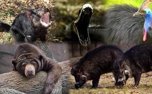 1001 thắc mắc: Những động vật nào hung hăng nhất thế giới, chớ dại 'cà khịa'?