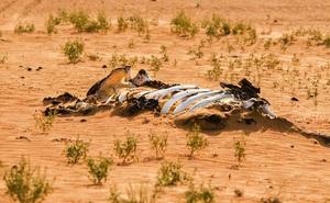 Cảnh báo đỏ: Đại tuyệt chủng lần thứ 6 đang diễn ra nhanh hơn nhiều so với mọi dự báo, lỗi hoàn toàn do con người