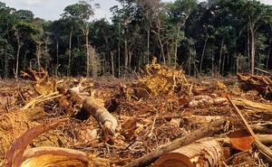 """Dù thế giới """"đình trệ"""" do COVID-19, hệ sinh thái của Trái Đất vẫn đang bị đe dọa nghiêm trọng"""