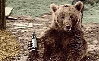 Huyền thoại hạ sĩ gấu: Uống bia hút thuốc như người, tham gia tải đạn trong Thế chiến II