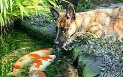 Thấy chó cưng thường xuyên trốn ra ngoài, sinh nghi nên quyết định theo dõi, chủ nhân kinh ngạc trước những gì nhìn thấy