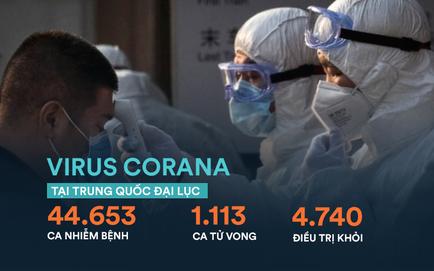 Nhật Bản: Thêm 40 trường hợp nhiễm virus COVID-19 trên du thuyền bị cách ly, 1 nhân viên kiểm dịch nhiễm bệnh