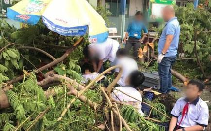 Họp báo vụ cây phượng vĩ bật gốc đè một học sinh ở TP.HCM tử vong