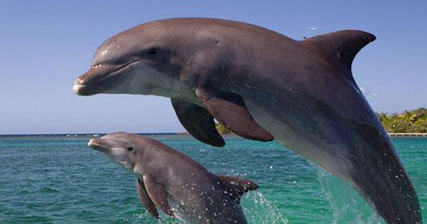1001 thắc mắc: Có phải cá heo tiến hóa từ 1 loài động vật trên cạn?