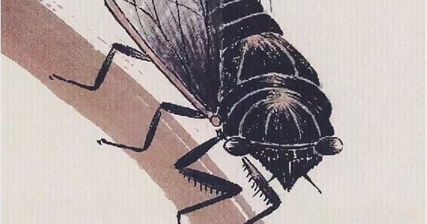 Bức tranh được định giá 800 triệu NDT mà chỉ vẽ 1 con ve sầu: Sau khi phóng to 20 lần, chuyên gia nhận định