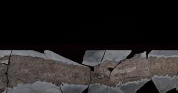 Madagascar có thể là thành trì bí mật của cá 'hóa thạch sống'