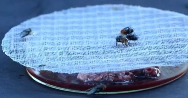 Vụ án chấn động thời Tống: Sử dụng ruồi phá án, chuyên gia pháp y khiến sát nhân 'hành động lạ' tại hiện trường - mega 645