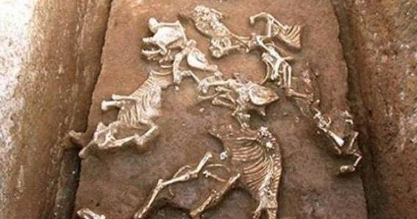 Tìm thấy giống loài 'chưa từng được biết đến' trong lăng mộ bà nội Tần Thủy Hoàng: Hé lộ lý do tuyệt chủng!