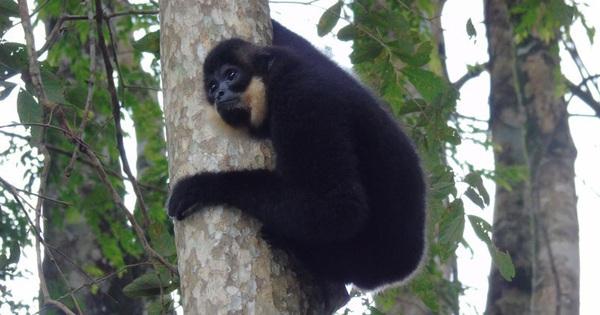 Chùm ảnh vẻ đẹp của các loài động vật tại vườn quốc gia Cát Tiên