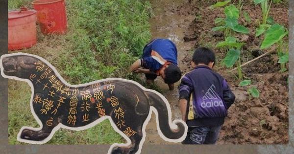 Cậu học sinh đào được con hổ đồng, bị chuyên gia xác định là hàng giả: Trước lúc mang đi tiêu hủy chân tướng mới lộ ra!