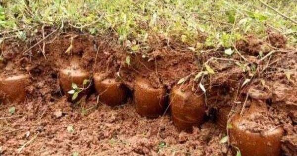 Hàng trăm bình gốm cổ được tìm thấy trên ruộng: Chuyên gia tìm đến, mặt mũi liền biến sắc và nói một câu khiến tất cả dân làng khóc trong sợ hãi