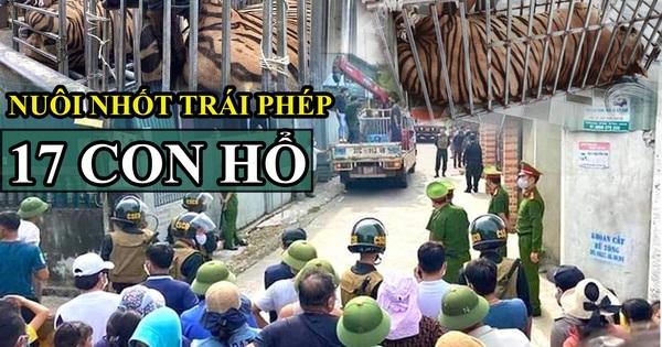 Vụ xây hầm nuôi nhốt trái phép 17 cá thể hổ ở Nghệ An, đây là loài hổ gì?