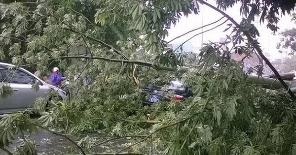 """Bão giật cấp 17 di chuyển """"thần tốc"""", sát mức thảm hoạ, cây xanh bị giật đổ đè bẹp xe biển xanh"""