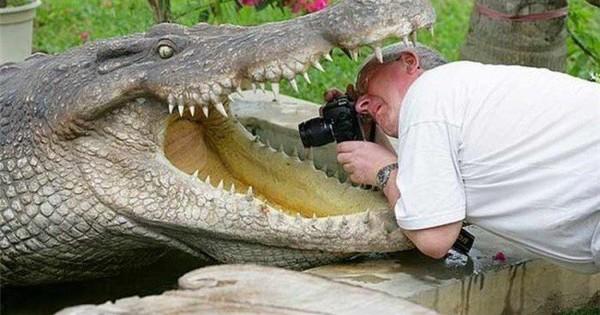 Nếu bạn thắc mắc tại sao các nhiếp ảnh gia lại chụp được những bức ảnh thiên nhiên, động vật đẹp đến kinh ngạc thì đây là câu trả lời