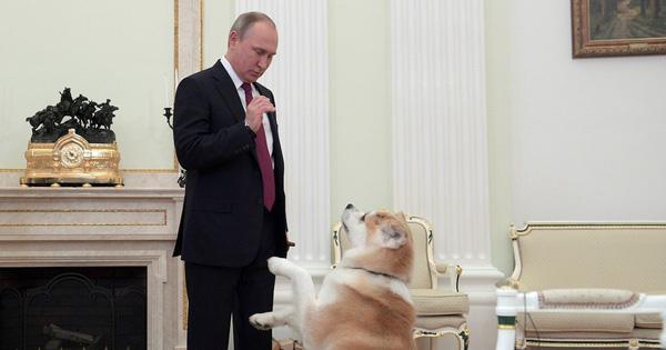 Tiết lộ bí mật thú vị về những chú chó của Tổng thống Nga Putin
