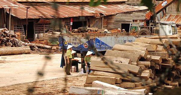Khai trừ đảng 2 cán bộ kiểm lâm ký khống hàng trăm m3 gỗ lậu