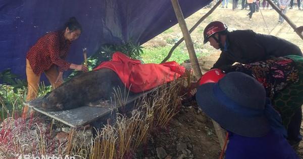 Cá ông nặng khoảng 40kg dạt vào cửa sông ở Nghệ An