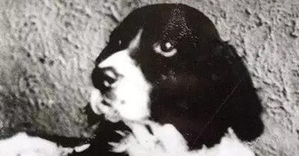 """Jim – chú chó phi thường nhất lịch sử: Nghe hiểu nhiều thứ tiếng khác nhau, """"thánh tiên tri"""" đoán đâu trúng đó"""