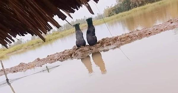 Hai chú chó ngồi im canh đầm tôm, câu chuyện đằng sau khiến người ta càng thêm cảm động