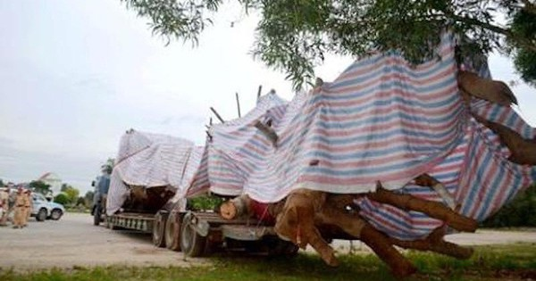 """Quảng Ngãi: Họp giải quyết cây """"siêu khủng"""" hồ sơ bất thường"""