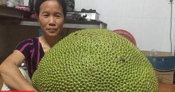 Khoe được mời ăn quả mít gần 20kg, thanh niên bị 'ném đá ngược' vì không đăng ảnh… múi mít