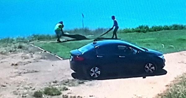 Hai người đi ô tô trộm cỏ nhân tạo ở bán đảo Sơn Trà