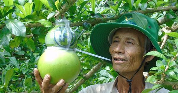 Trái cây miền Tây in chữ 'Phúc – Lộc – Thọ' đắt hàng trước Tết