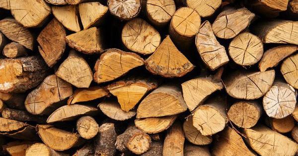 Các nhà khoa học đã tạo ra gỗ nhân tạo có thể chống nước và lửa, sản xuất cũng nhanh hơn so với trồng cây