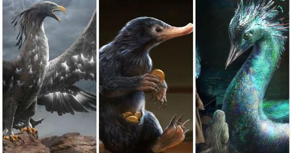 """12 sinh vật huyền bí """"hiếm có khó tìm"""" từng xuất hiện trong Fantastic Beasts And Where To Find Them (Phần 1)"""