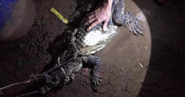 Cá sấu mò vào nhà dân ở Bình Dương bắt trộm gà