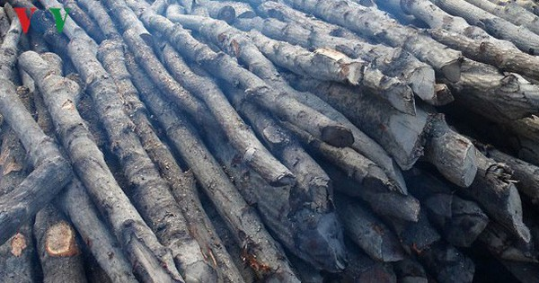Cà Mau làm rõ thông tin cán bộ coi rừng bị tố cho chặt cây rừng bán