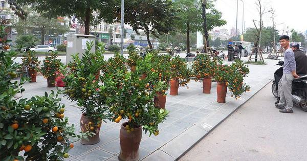 Hà Nội dừng đào đường, tổ chức 64 chợ hoa Xuân Tết