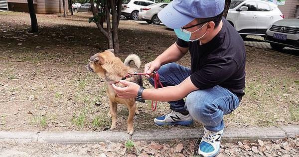 Chủ qua đời vì COVID-19, chó cưng vẫn chờ đợi suốt 3 tháng ở bệnh viện