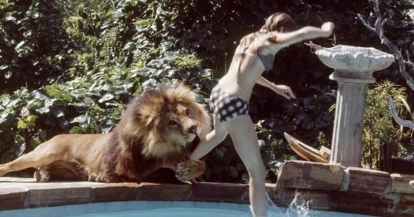 Bức ảnh con sư tử tấn công cô gái trẻ ngỡ là khoảnh khắc kinh hoàng cuối cùng của nạn nhân nhưng sự thật trái ngược hoàn toàn