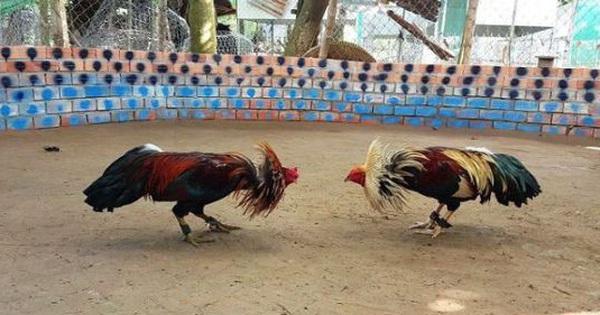 Hà Tĩnh: Công an đột kích bắt 21 đối tượng đá gà ăn tiền