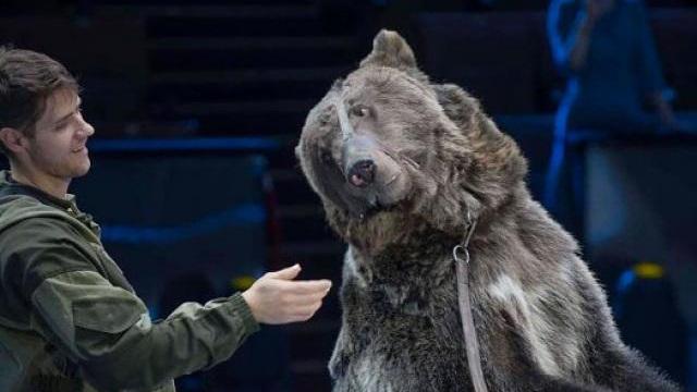 Nga: Quên tháo khẩu trang khi vào chuồng gấu cưng và cái kết thảm khốc