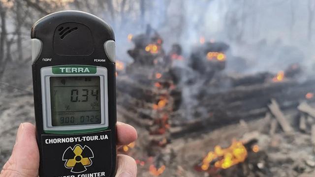 Lượng phóng xạ tại lò phản ứng hạt nhân Chernobyl hiện nguy hại cho loài ong