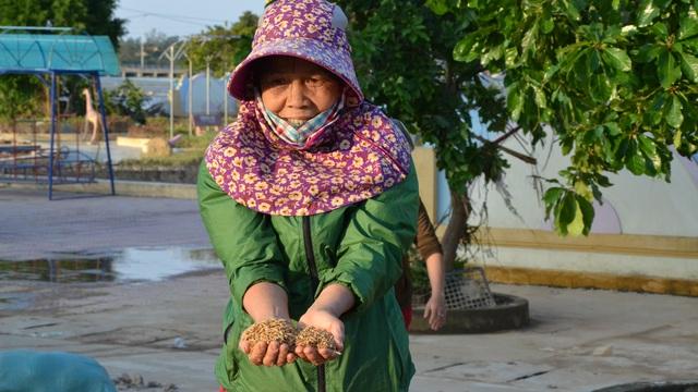 """Lũ rút, dân Quảng Bình lao đao vì thóc lúa mọc mầm: """"Thóc này giờ chỉ phơi cho gà vịt ăn thôi"""""""