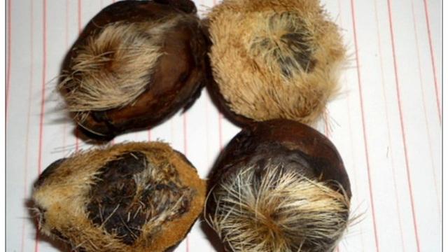 Chất độc phổ biến trong phim cổ trang Trung Quốc, lá ngón hóa ra cũng đã từng xuất hiện
