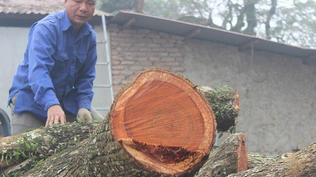Gần hai năm, lô gỗ sưa 'trăm tỷ' ở Hà Nội nằm trong thùng container