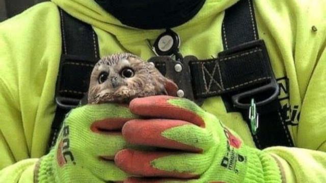 Chặt cây cao ngang tòa nhà 5 tầng kéo đi suốt 272km, về nhà mới phát hiện ra một con cú!