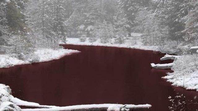 Rùng mình cảnh sông ở Nga đỏ dị thường, động vật không dám xuống