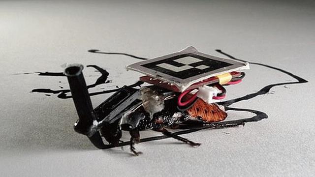 Các nhà khoa học Nhật cấy ghép máy móc vào gián, bắt chúng phải phục vụ con người