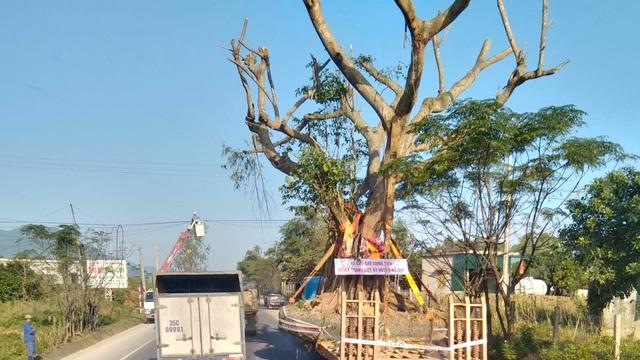 Xôn xao hình ảnh xe chở cây khổng lồ dựng đứng đi trên quốc lộ ở Hà Tĩnh