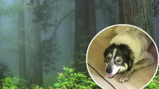 Tìm mãi không ra chú chó đi lạc trong rừng, anh thanh niên bắc luôn dàn loa siêu khủng để gọi 'boss' quay về