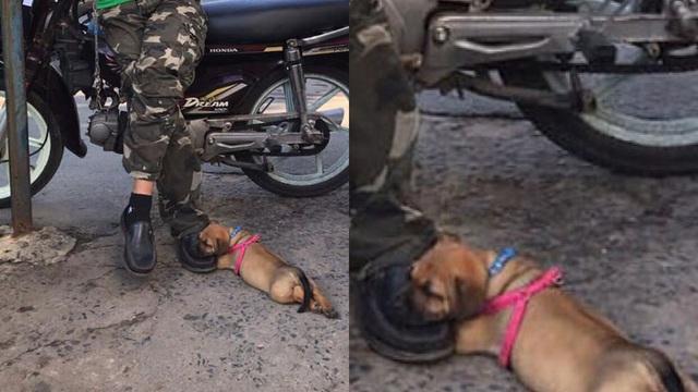 """Bác xe ôm không dám nhúc nhích để con cún gối đầu ngủ - bức ảnh dễ thương hiếm có được like """"ầm ầm"""""""